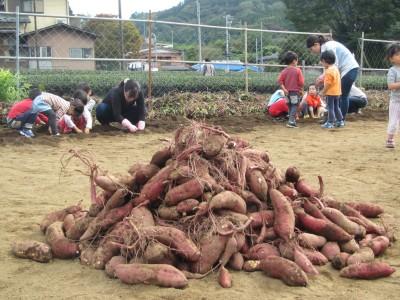 芋の山IMG_5267