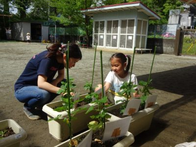 枝豆収穫DSC00362