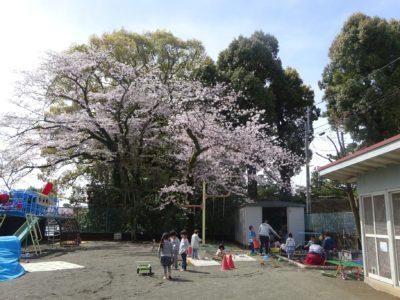 DSC05107園庭