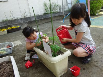 DSC05556野菜