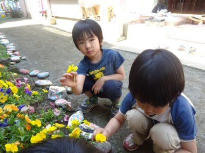 DSC05569押し花