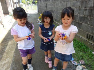 DSC05566押し花