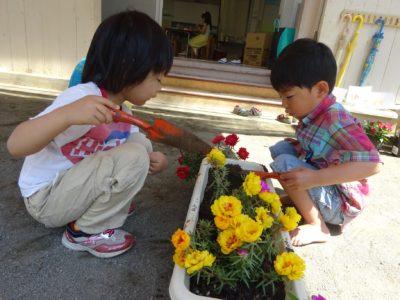 DSC05704花植え