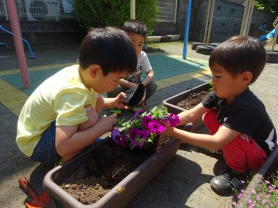 DSC05722花植え