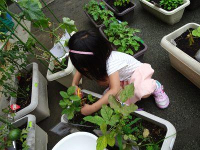 DSC01178枝豆