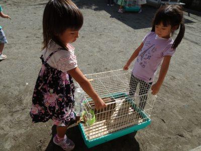DSC01952ウサギ避難