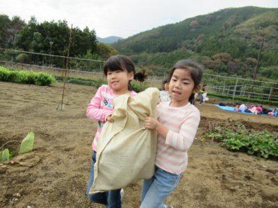 IMG_1412芋掘り芋運び
