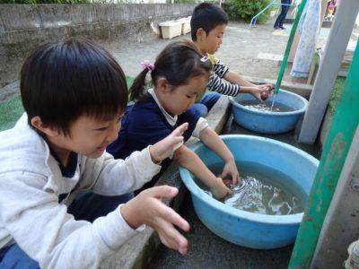 DSC02583蒸かし芋洗う