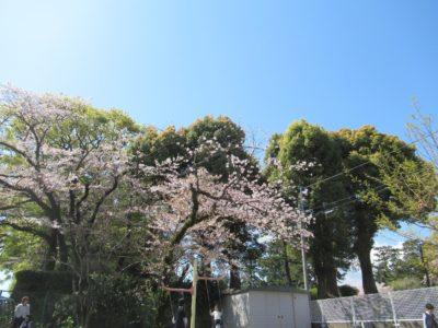 IMG_3113入園