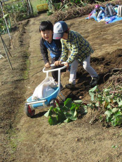 IMG_4834芋掘り運ぶ