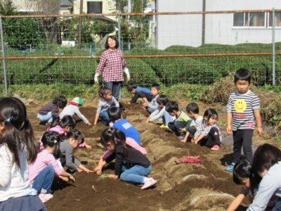 IMG_4811芋掘り