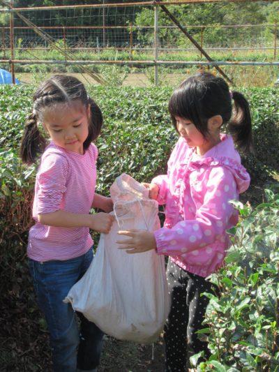 IMG_4841芋掘り運ぶ