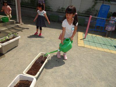 DSC00308枝豆